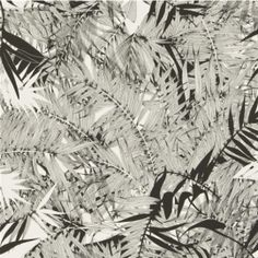 The wallpaper Eden Roc - Nacre - from Christian Lacroix is wallpaper with the dimensions m x m. The wallpaper Eden Roc - Nacre - b Palm Leaf Wallpaper, Feature Wallpaper, Tropical Wallpaper, Botanical Wallpaper, Home Wallpaper, Colorful Wallpaper, Wallpaper Ideas, Christian Lacroix Wallpaper, Black And White Wallpaper