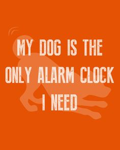 And the best alarm clock there is ⏰ #WeeklyPLAYQuote   #dogquotes #dogmoments #dogsarethebest #dogloversfeed #dogslife #dailydogs #wedontdeservedogs #dogsarebetterthanhumans #dogsareloves #dogsarethebest #dogsmakeeverythingbetter #dogmeme #introvert #caninetrovert #dogsayings #dogjokes #dogmomaf #mood Cute Cat Quotes, Dog Quotes Funny, Funny Dogs, Play Quotes, Best Alarm, Dog Jokes, Animal Quotes, Four Legged, Introvert