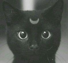 #cat #moon #cute #black