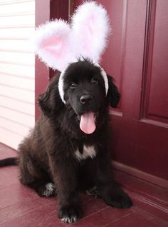Rent Newfies out as bunnies? I think that requires too much suspension of belief.