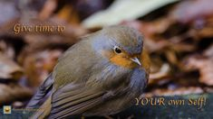 Find images of Robin Blur. ✓ Free for commercial use ✓ No attribution required ✓ High quality images. American Robin, Bird Free, World Birds, Robin Bird, Weight Loss Blogs, Cool Wallpaper, No Cook Meals, Beautiful Birds, Free Stock Photos
