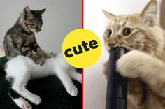 22 Cat GIFs That Are So Pure You'll Cry With Happiness