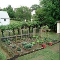 Aiman's Mom Backyard Garden