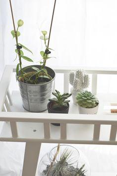 Urban Jungle Bloggers: the #plantshelfie by @ZimtZebra