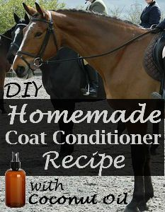 Homemade Coat Conditioner with Coconut Oil | Savvy Horsewoman  Fills a 16 oz spray bottle  2 tbs. Fractionated Coconut Oil 2 tsp.Vegetable Glycerin 1 tsp. Witch Hazel Essential Oils (optional) Distilled Water (approx. 2 cups)  Shake well before using.