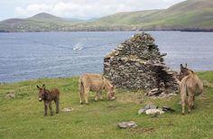 A small archipelago off the coast of County Kerry. Love Ireland, Ireland Travel, Old Irish, The Donkey, Tour Tickets, Through The Window, Archipelago, Travel With Kids, Trip Advisor