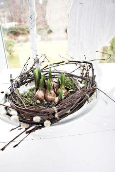 Unique springtime decor:  wreath-nest holds sprouting Narcissus