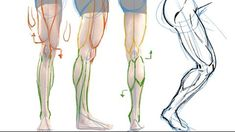 How to Draw the Muscles of the Leg – the Easy Way! – Hildur.K.O