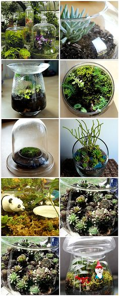These Terrariums are beautiful. I used to make these in the early 1970's...I guess they are back. Great fun!