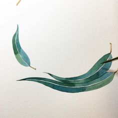 #WIP Eucalyptus leaves again! I love painting these. #watercolor #illustration…