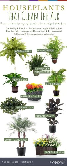 10 Best Houseplants That Clean The Air: Help Detox Your Home by sharlene