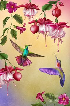Humming Birds And Fuchsia-jp2784 Painting