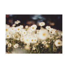 darling ❤ liked on Polyvore featuring pictures, backgrounds, photos, flowers, photography, fillers and scenery