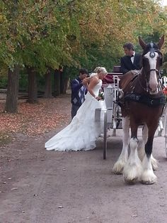 Camelot Clydesdale Farm in Flushing, MI. BEST IDEA EVER! So romantic!