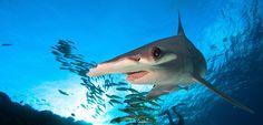 Sharks Are Worth More Alive Than Dead • Scuba Diver LifeScuba Diver Life
