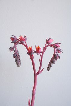 pink and purple flowers via flickr by Rachel T. Robertson (Display Lady)