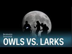 Business Insider: Night Owls vs Morning Larks