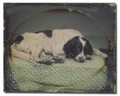 A Polar Bear's Tale: Daguerreotypes...and dogs