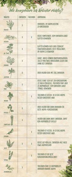 Einfrieren, trocknen oder lagern — darauf solltet ihr bei Kräutern achten! #emsa #emsaliebe #kräuter #haltbar #herbs #freshherbs