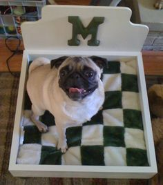 Mabel the Pug in her new homemade dog bed - Make a custom bed for your pet!