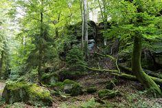 Bildergebnis für wilde natur