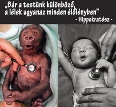 Love Has No Labels, the soul is the same in all living creatures, although the body of each is different, Hippocrates human baby and baby gorilla same face with stethoscope on chest Primates, Baby Gorillas, Orangutans, Vegan Quotes, Vegan Memes, Human Babies, Humor Grafico, Animal Rights, Akita