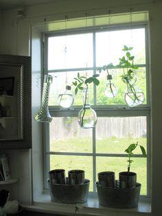 Shoestring Pavilion: Window plant propagation (crazy scientist style)