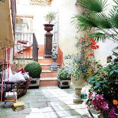 1000 images about plantas para interior on pinterest for Plantas para patio interior