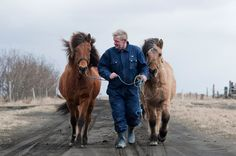 a farmer and horses during Iceland's volcanic eruption