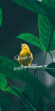 Good Morning Friends Images, Good Morning Picture, Morning Pictures, Hd Nature Wallpapers, Beautiful Flowers Wallpapers, Beautiful Nature Wallpaper, Beautiful Morning Quotes, Good Morning Quotes, Have A Happy Day