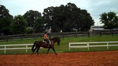 """""""It;s time to change our balance!  1st Level Dressage Canters.  Working, lengthening.  Transitions to Trot...."""""""