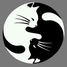 Beautiful! Cat Yin Yang