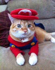 Super Mario cat