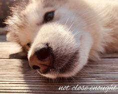 this is my sunny day mood . Malamute Puppies, Alaskan Malamute, Day And Mood, Adele, Arctic, Sunny Days, Ranch, Corgi, Peace