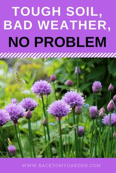 """Cindy Shapton is a well-known garden blogger from Franklin Tennessee.   She describes the area as enjoying fickle weather and challenging soil that needs constant amending. Cindy is a specialist on growing herbs and a Master Gardener.  She is called """"The Cracked Pot Gardener""""."""
