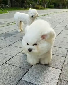 Spending an hour on your hair to have it pawsitively ruined - cute tiere - tierbabys Cute Little Animals, Cute Funny Animals, Funny Dogs, Cute Cats, Cute Baby Dogs, Cute Dogs And Puppies, Cute White Puppies, Cute Animal Videos, Funny Animal Pictures