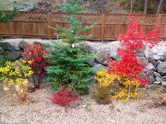 Fall ...Johnson garden Kelowna BC