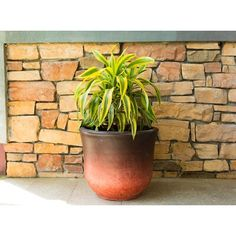 World Menagerie Susan Tall Bell Pot Planter Size: 1