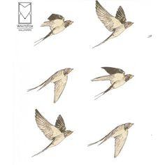 Wallpaper #Flying Bird on White by White Fox