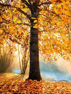 ✯ Autumn Beauty