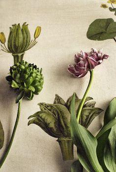 Flowers & Textile