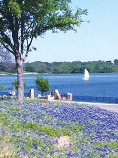This gorgeous shot of bluebonnets at White Rock Lake was taken by White Rock Lake Weekly reader Dave Acree. Congratulations, Dave! You just won a $25 gift certificate to one of your favorite area restaurants. Submit your favorite shot of the lake to editor@whiterocklakeweekly.com. You could be our next winner!