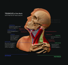 3D models | JMeyer Medical Media