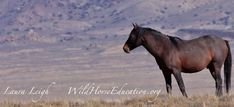 "Note to Wild Horse Education (WHE) Readers: At WHE we file cases that go ""out of the box"" not knowing what the outcome will be. We are the only organization to bring documentation to co…"