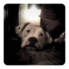 Someone's Dog at The Lansdowne (Jan 2011)  by   Me