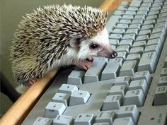 O wants to name a child Abraham Lincoln. I told him perhaps he could have a pet named that. I suppose BT will need a friend and if we trained a hedgehog to type, he'd be worthy of the name Abe