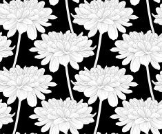 129 best black and white flowers background images on pinterest backgrounds black and white flowers illustration search stock photos daisy searching bellis perennis daisies mightylinksfo