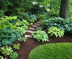 Nice variety of hostas and a stone path in the shade of tall trees