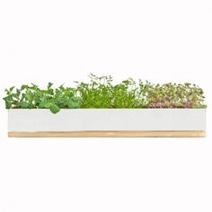 MicroGreens Windowsill Grow Box by Sprout Home; great way to keep herbs close for cooking.