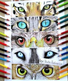 animal art projects - Animals eye drawing by Teuta Podvorica Regard Animal, 7th Grade Art, Middle School Art Projects, Realistic Eye Drawing, Art Anime, Art Lessons Elementary, Color Pencil Art, Eye Art, Art Lesson Plans